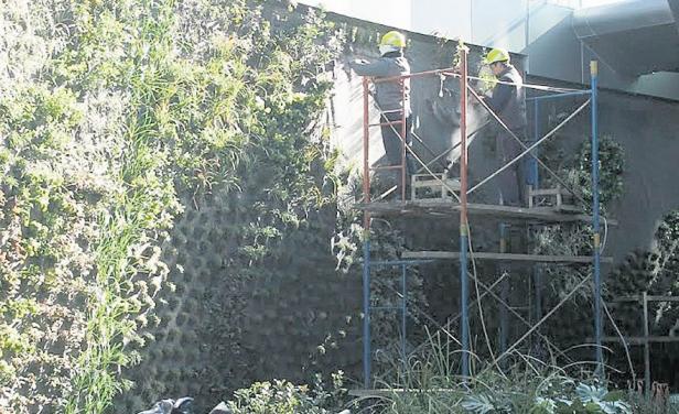 Jard n vertical lleg a zonamerica de la mano de un for Jardines verticales historia