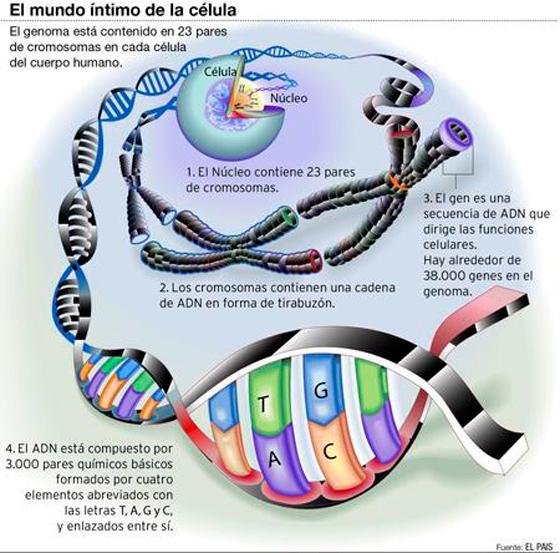 El Instituto Pasteur coordinará el desarrollo del genoma uruguayo