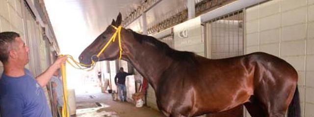 El origen de la leyenda Sir Fever, el mejor caballo que ha dado Uruguay en muchos años