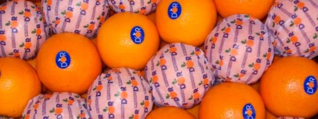 Crece la demanda mundial de fruta uruguaya: en 2014 las exportaciones crecieron 20 %