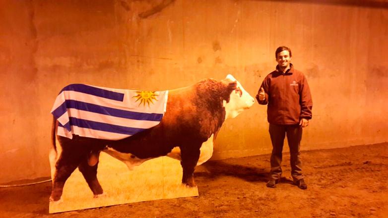 Es uruguayo, cuesta más de USD 100.000 y es el campeón del mundo entre los machos Hereford
