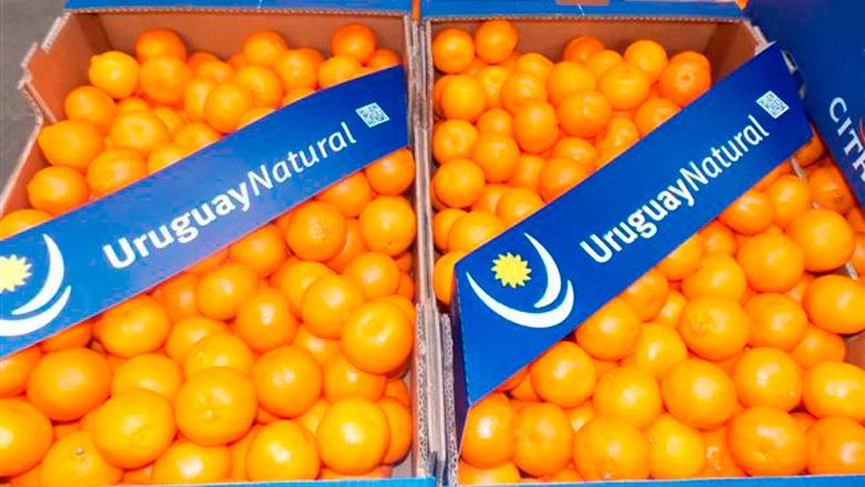 En lo que va del año Uruguay ya exportó más de la mitad de cítricos a EEUU que en 2014