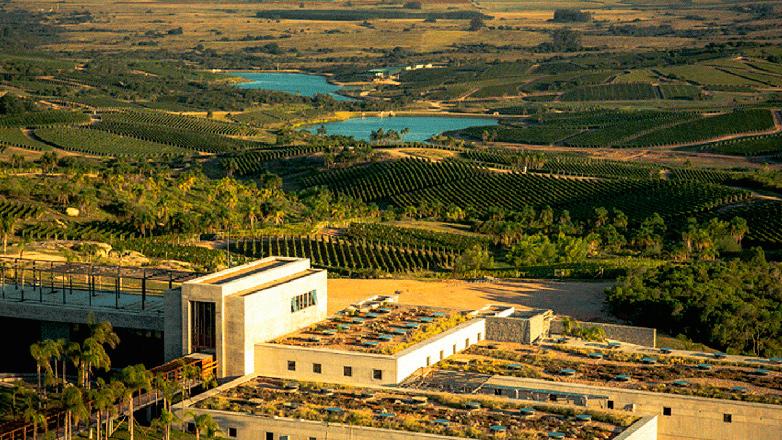 Bodegas de puertas abiertas: exitosa cepa Tannat impulsa desarrollo del enoturismo en Uruguay