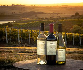 Billionaire Alejandro Bulgheroni Has New Wine Dreams for South America