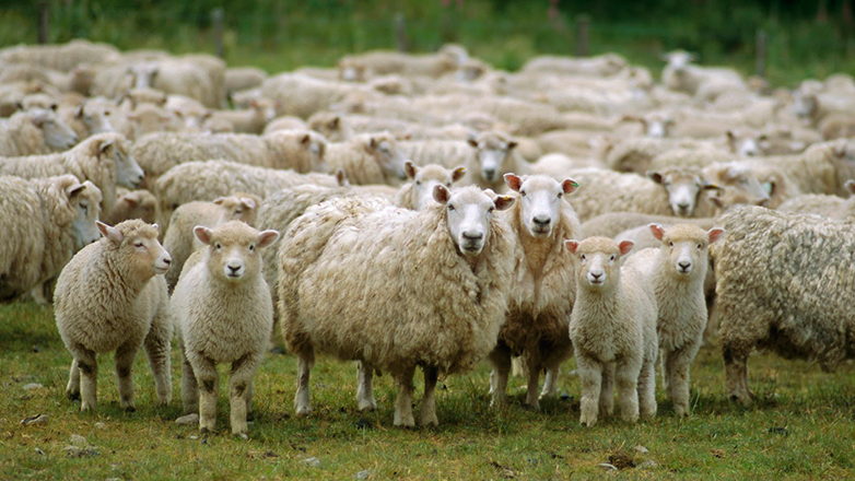 Habilitación de EE.UU. abrió perspectivas para vender carne ovina con hueso a México