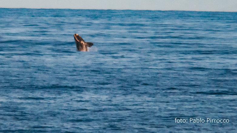Es el momento ideal para seguir la ruta de las ballenas en su paso por Uruguay
