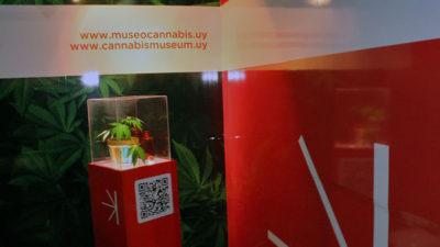 Montevideo cuenta con el primer Museo del Cannabis en Sudamérica