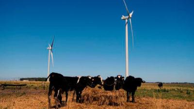 Con alta demanda, UTE sumó 10.000 socios a parque eólico