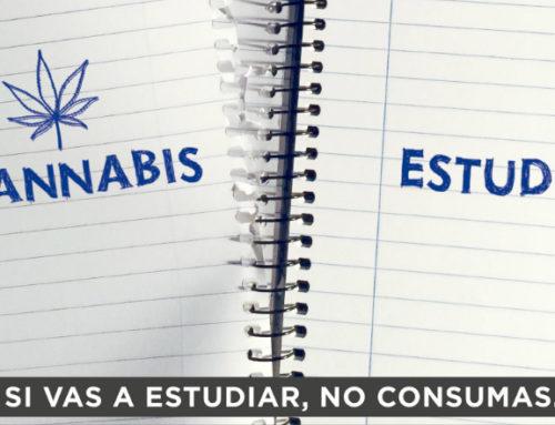 """Campaña """"Regular es ser responsable"""" busca prevenir el consumo de cannabis"""
