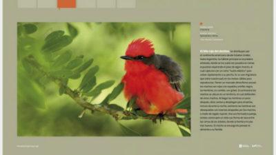 Para descubrir con los niños algunas maravillas de la fauna del Uruguay, en el Prado