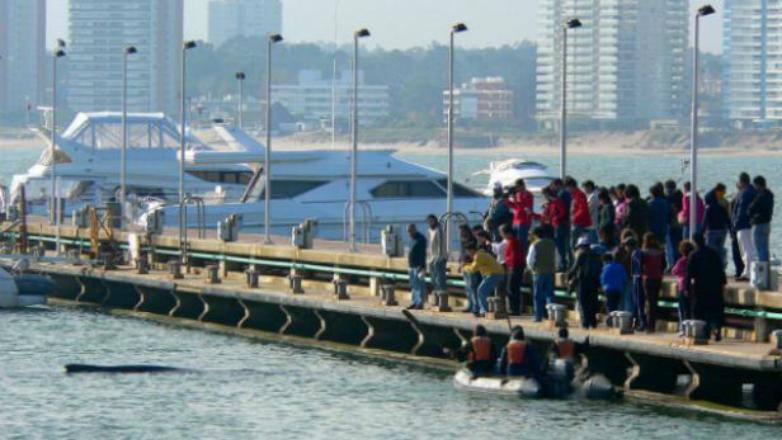 Comienza la temporada de avistamiento de ballenas en Uruguay