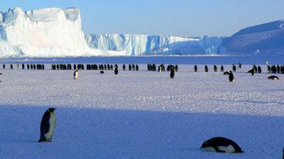 Se patentará importante descubrimiento realizado por científicos uruguayos en la Antártida