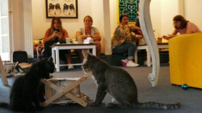 Un café en donde el cliente puede hallar el gatito de su vida