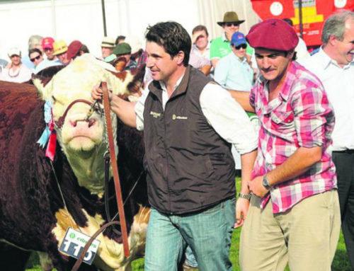 Histórica exportación de genética uruguaya