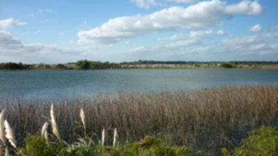 Humedales ocupan 12% del territorio