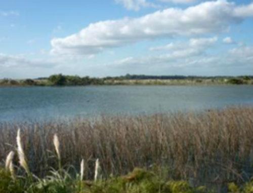 Humedales ocupan 12 % del territorio uruguayo y son clave para regulación del ciclo de carbono