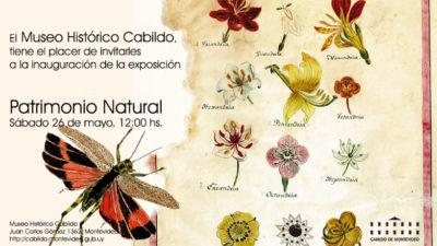 El Patrimonio Natural de Uruguay se expone desde este sábado en el Cabildo de Montevideo