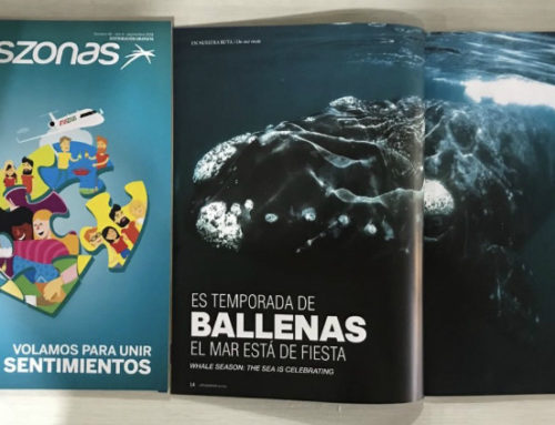 Las ballenas de Rocha son protagonistas en la revista de la aerolínea Amaszonas