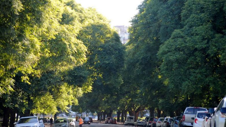 Montevideo, qué verde te veo: ¿qué árboles reinan en las veredas de la ciudad?