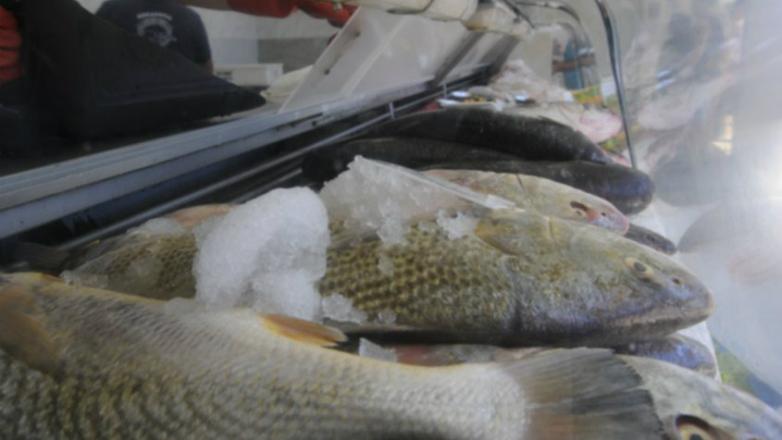 Con la corvina como producto estrella, Uruguay exportó más pescado