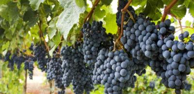 Uruguay y sus vinos en las pantallas del mundo