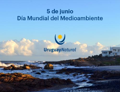 En el Día Mundial del Medio Ambiente: estas son las acciones que impulsa Uruguay para proteger sus ecosistemas