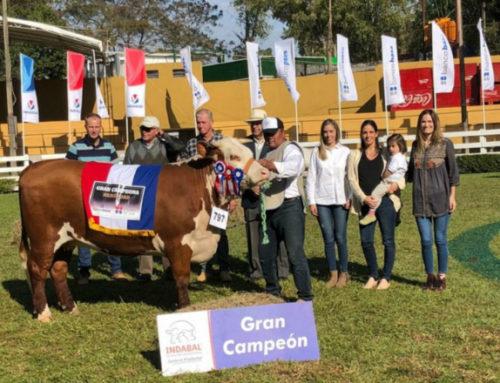 Genética uruguaya triunfó en Expo Paraguay