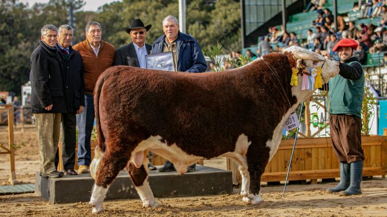 """Expo Palermo: toro genética de """"El Baqueano"""" fue Gran Campeón Hereford"""