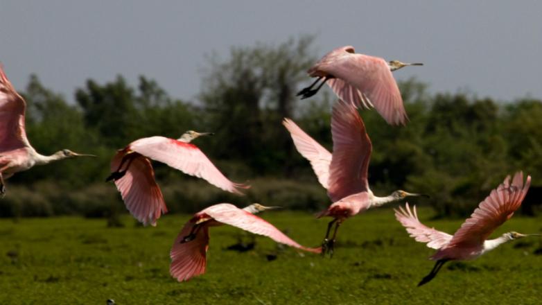 Uruguay, el país de los pájaros pintados despierta la pasión por mirar