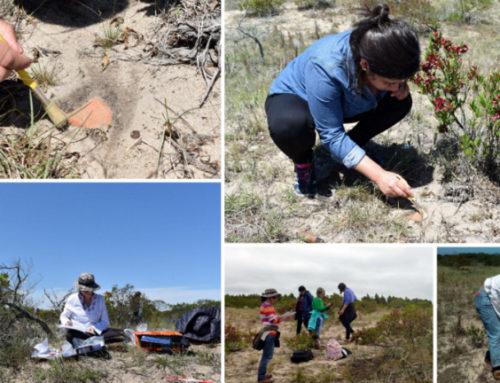 Encontraron piezas arqueológicas en la desembocadura del Arroyo Sauce y Punta Artilleros