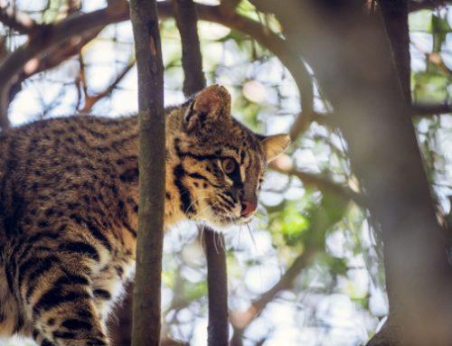 Ambá: la organización que busca rescatar la flora y fauna de la Sierra de Rocha