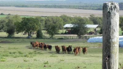 Uruguay el país con más área agropecuaria en el mundo