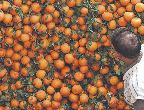 Vietnam opens up to Uruguayan citrus