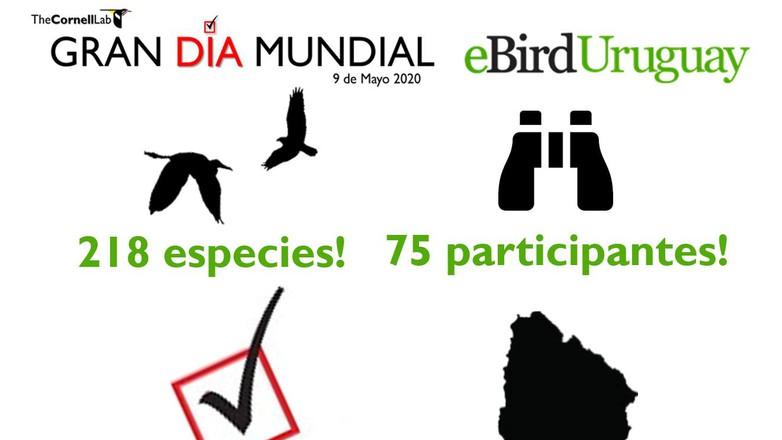 Exitoso Día Mundial de Observación de Aves en Uruguay