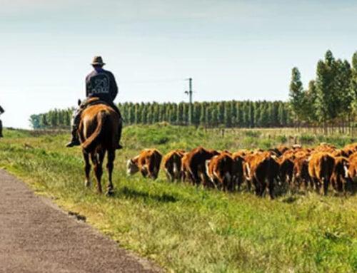 En busca del mejor asado de Uruguay, el país con cuatro veces más vacas que habitantes