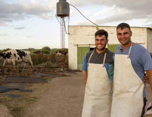 Building Back Better – Greening dairy production in the Santa Lucia watershed of Uruguay