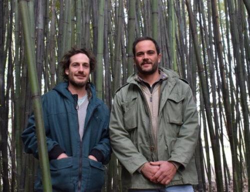 El pasto gigante o acero vegetal que se expande en Uruguay