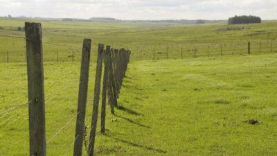 Aumenta el interés por canalizar inversiones en tierras de Uruguay