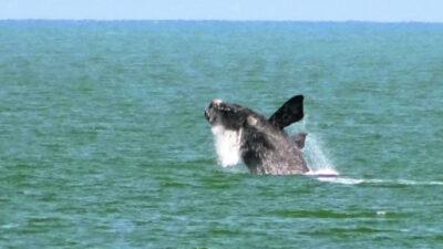 Avistamiento de ballenas 2020: ¿cuándo es la temporada y dónde se pueden ver?