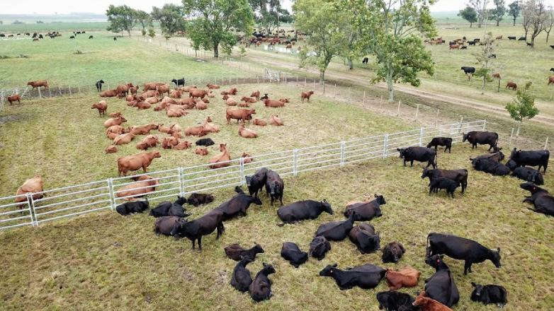 El USDA le puso números al crecimiento esperado en la agroindustria cárnica uruguaya