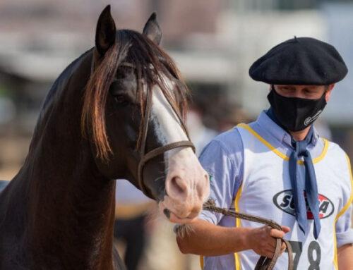 El mejor caballo Criollo del mundo es uruguayo, de Paysandú