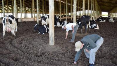 El tambero que encerró las vacas y empezó a producir un 89% más