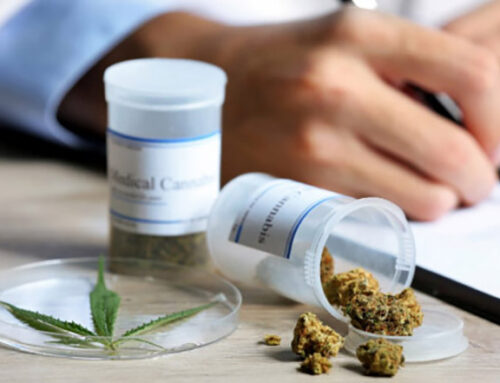 Emprendimientos de cannabis medicinal pisan fuerte en el Este