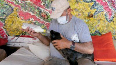 SOS Rescate Fauna Marina: un paseo para aprender y colaborar con los animales