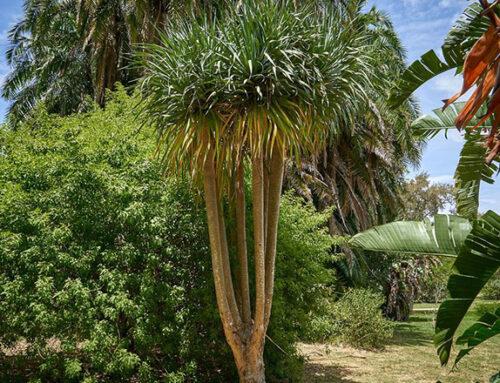 La vuelta al mundo en 80 árboles, una app para recorrer el Jardín Botánico