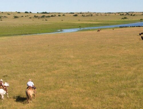Uruguay ranch first Latin American farm to receive Certified Humane label