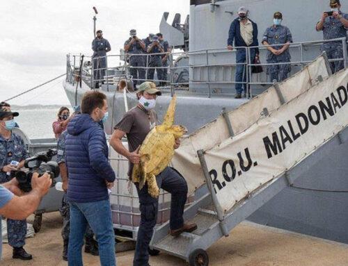 Nat Geo desembarcó en Maldonado y prepara un documental sobre fauna marítima