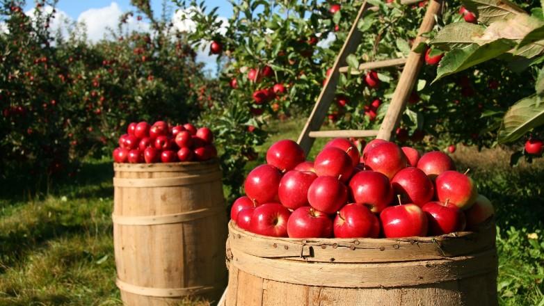 """Primer Congreso de Comercio de Frutas Frescas del Hemisferio Sur: """"Mantener al mundo abastecido"""""""