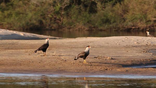 "Los ""pájaros pintados"" que nombran a Uruguay rincón de turismo responsable"