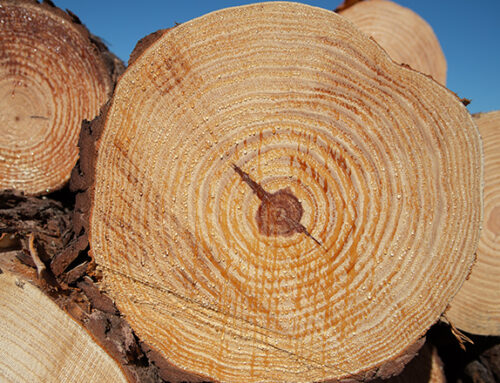 Uruguay's Wood Exports Seen Headed for Record on Asia Demand